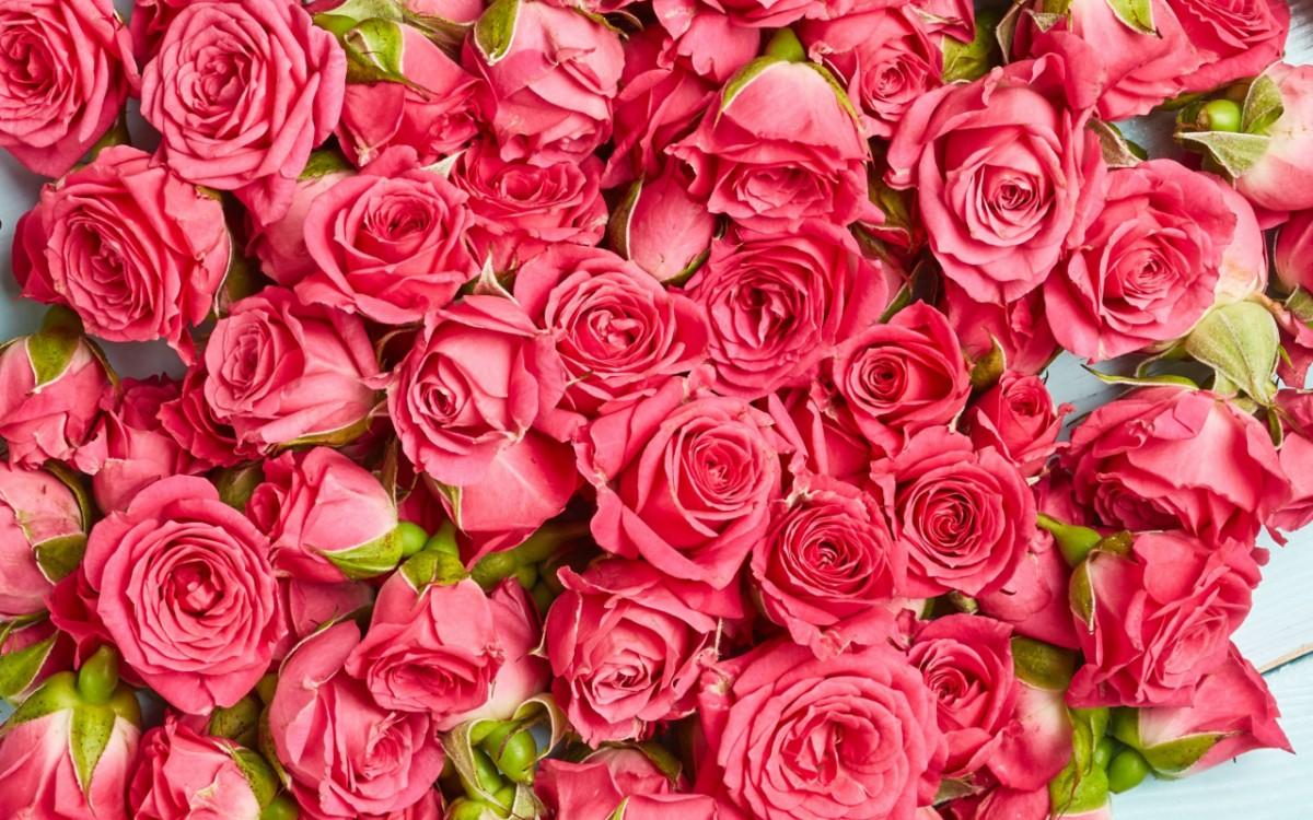 Пазл Собирать пазлы онлайн - Прекрасные розы