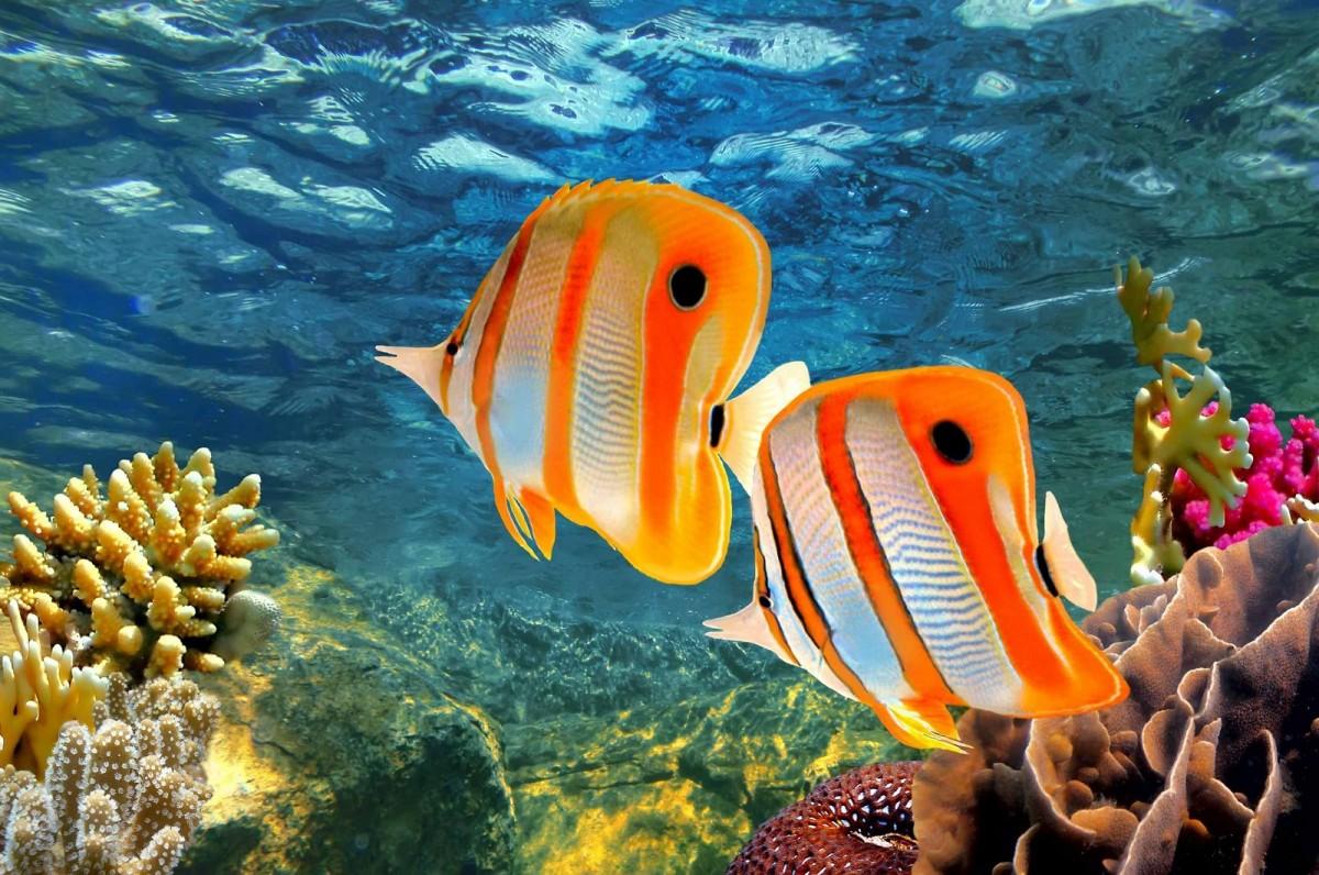 Пазл Собирать пазлы онлайн - Рыбы в океане