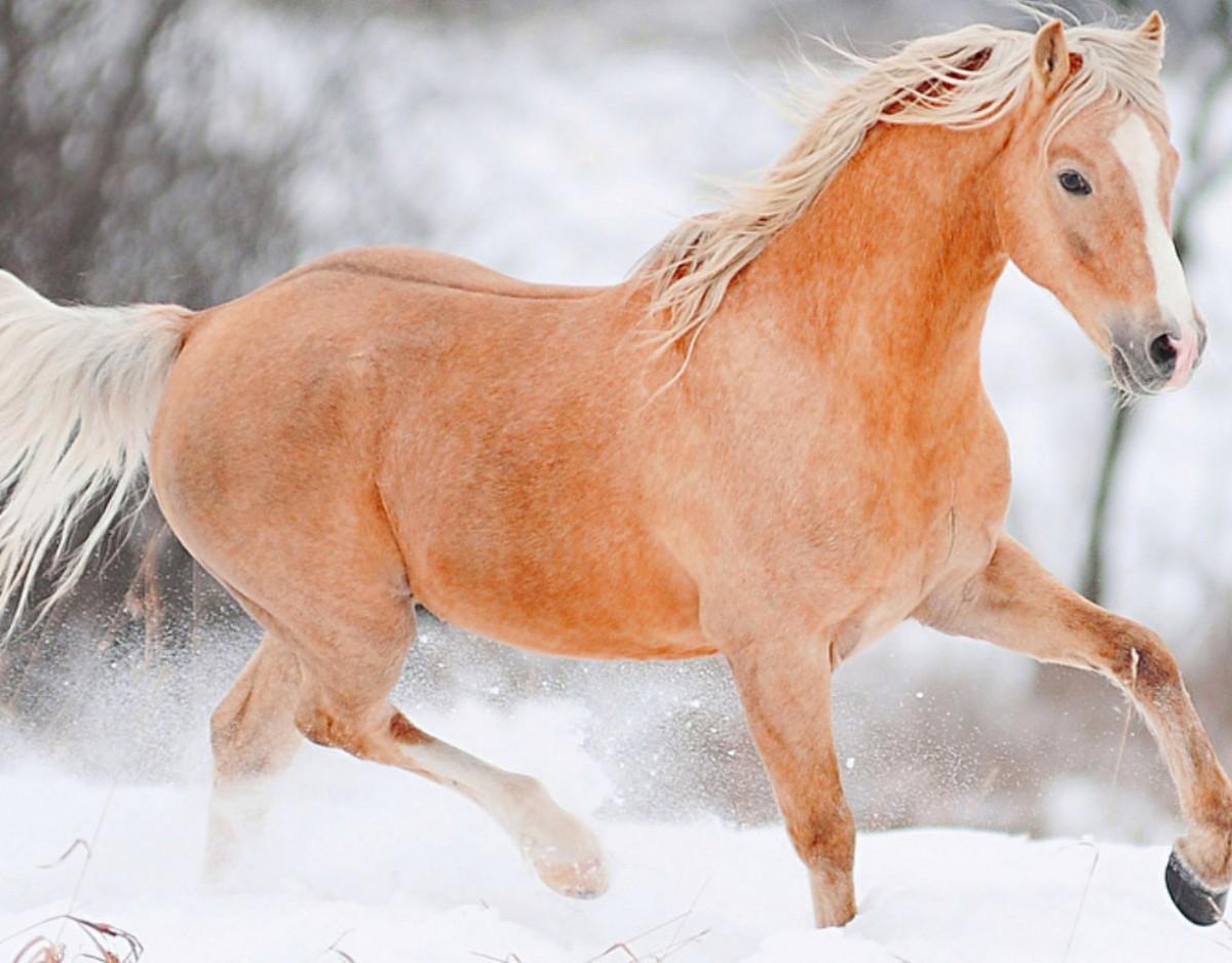 Пазл Собирать пазлы онлайн - Рыжий конь