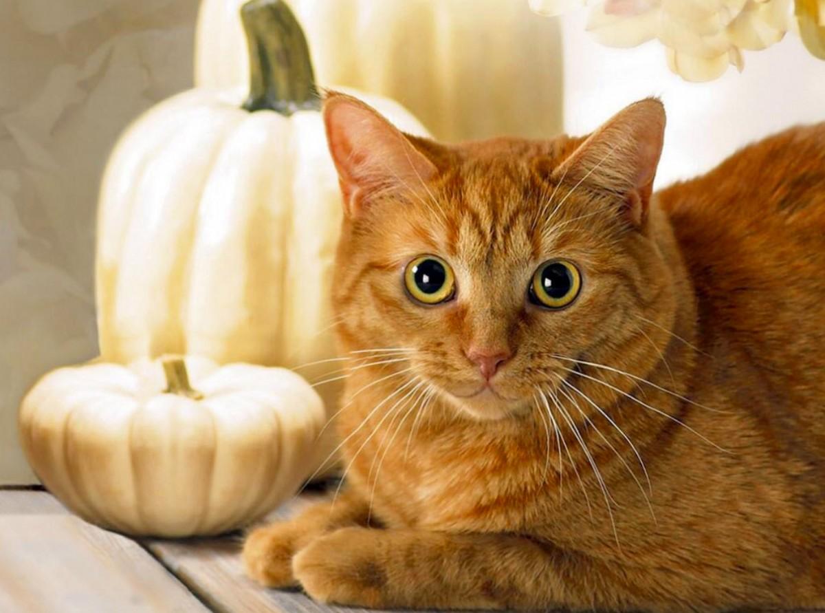 Пазл Собирать пазлы онлайн - Рыжий кот