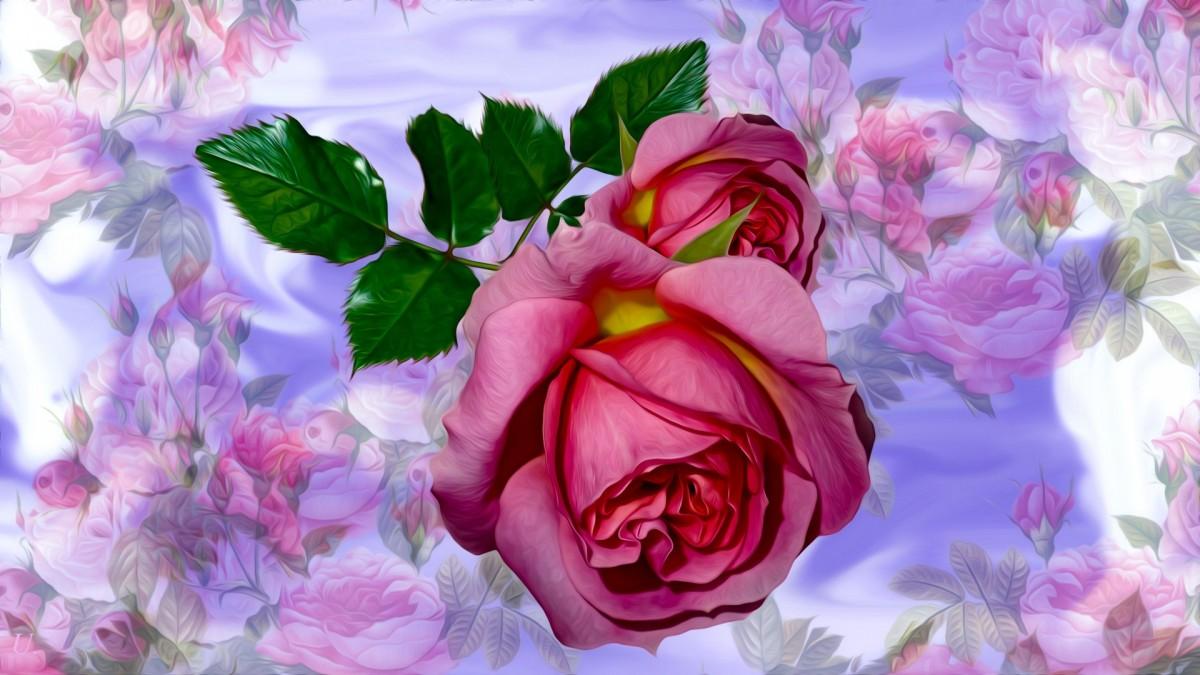 Пазл Собирать пазлы онлайн - Роза среди роз