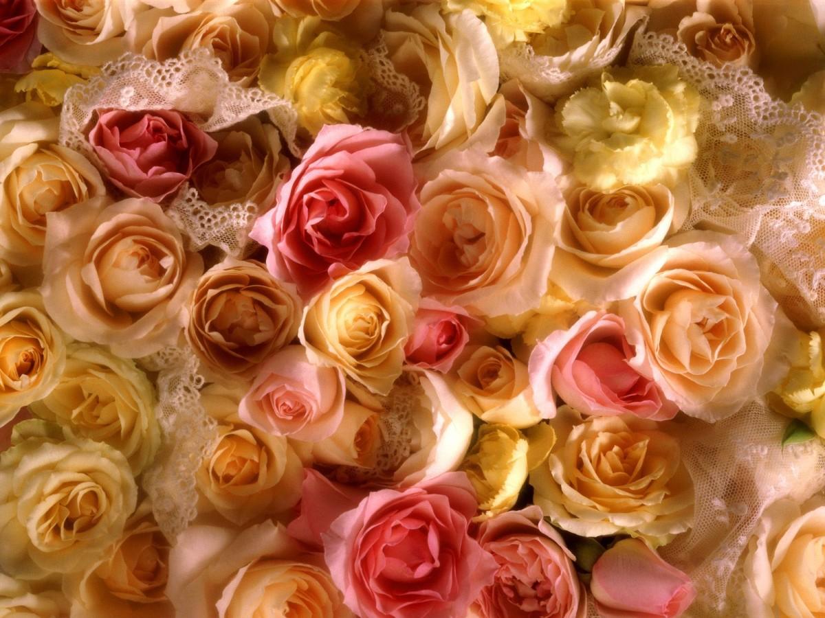 Пазл Собирать пазлы онлайн - Розы и кружево