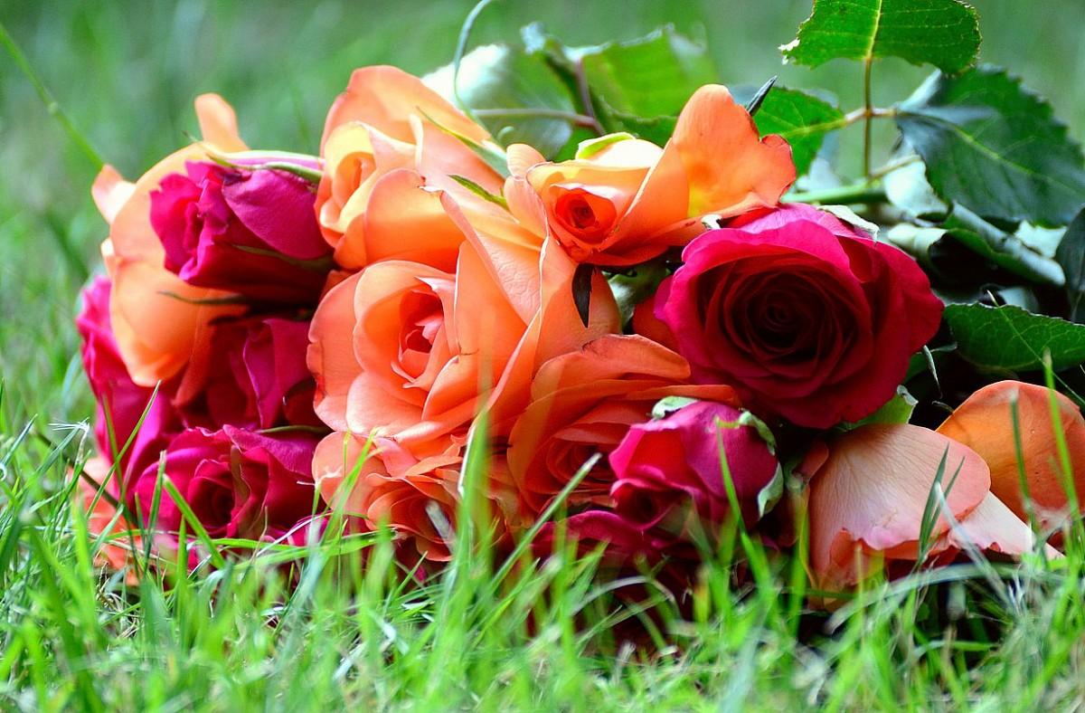Пазл Собирать пазлы онлайн - Розы на траве