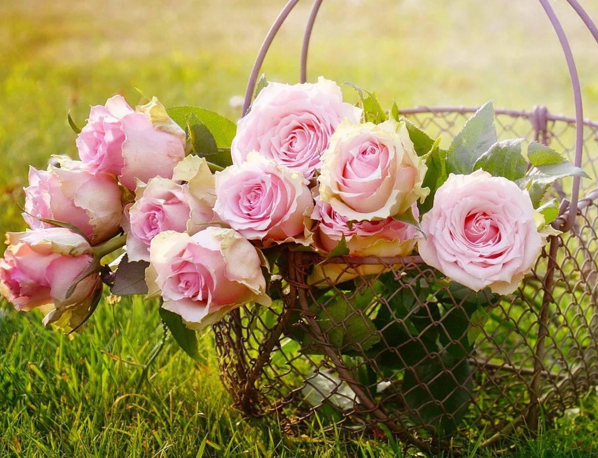 Пазл Собирать пазлы онлайн - Розы в корзине