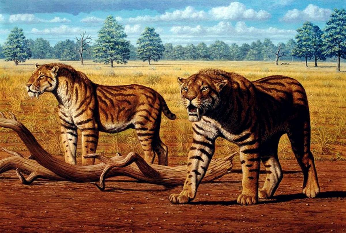 Пазл Собирать пазлы онлайн - Саблезубые тигры