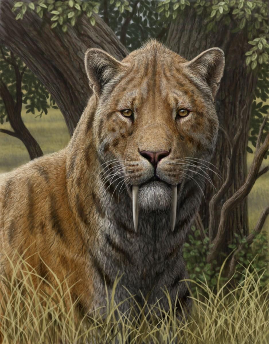 Пазл Собирать пазлы онлайн - Саблезубый тигр