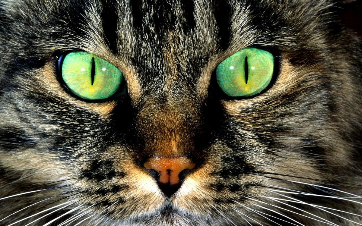 Пазл Собирать пазлы онлайн - Серый кот