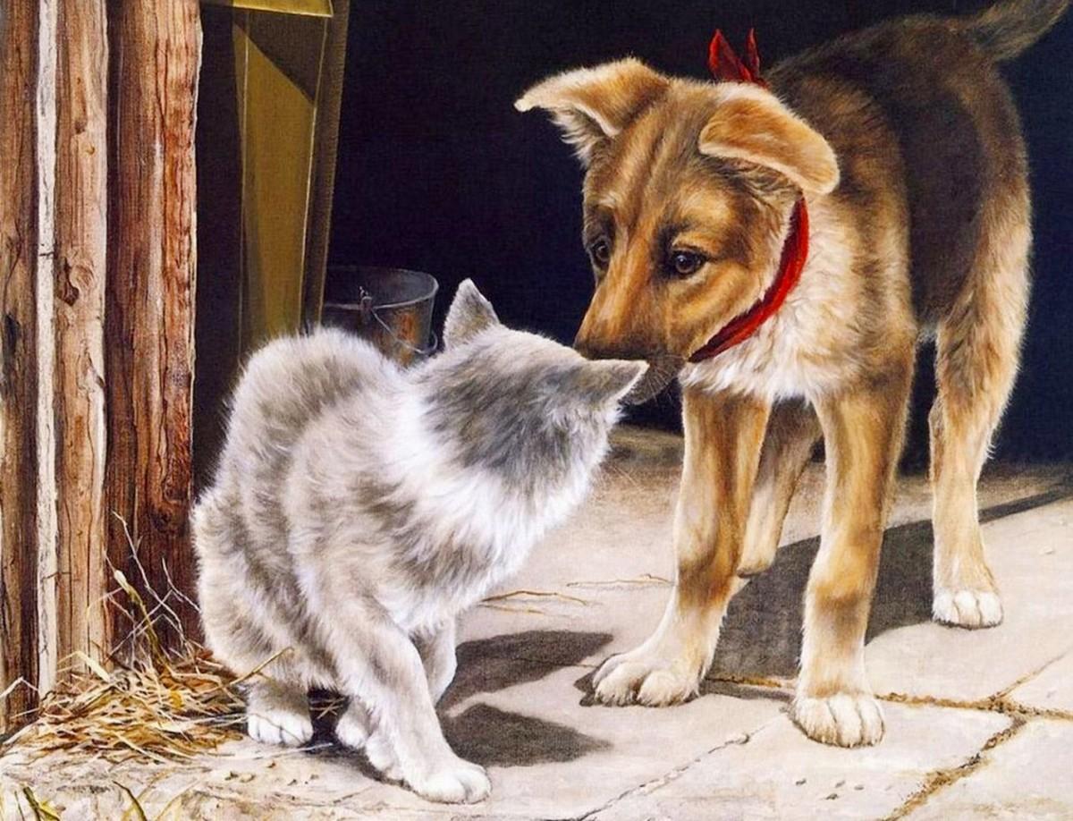 Пазл Собирать пазлы онлайн - Щенок и кошка