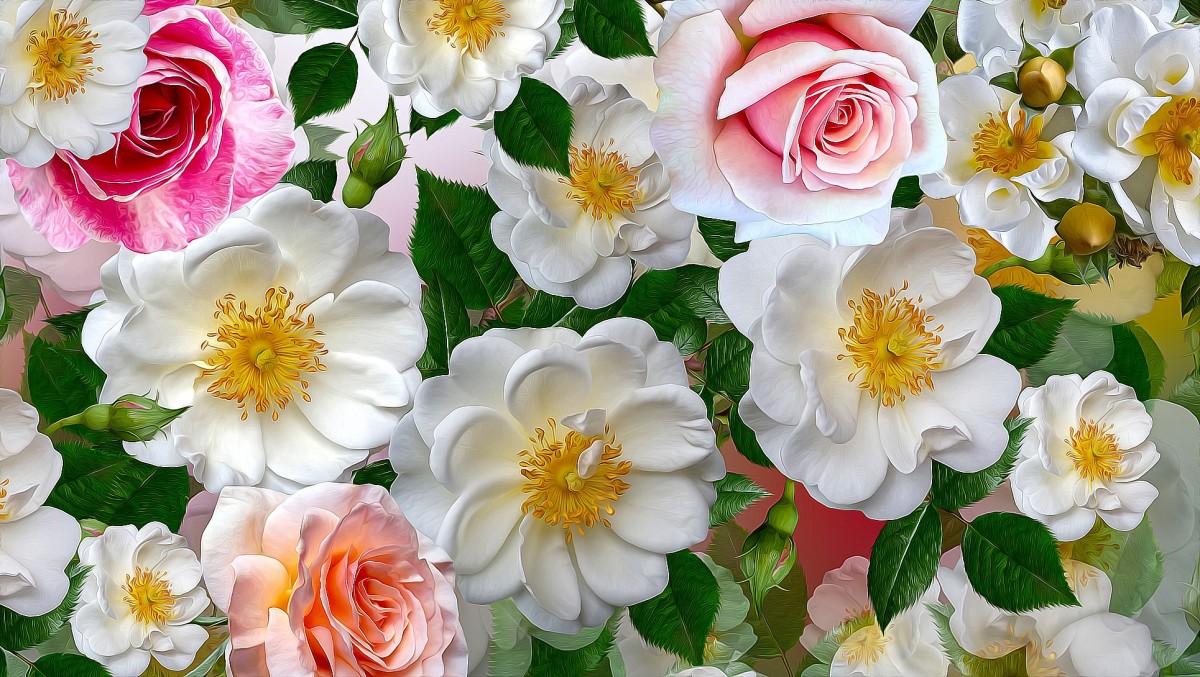 Пазл Собирать пазлы онлайн - Шиповник и розы