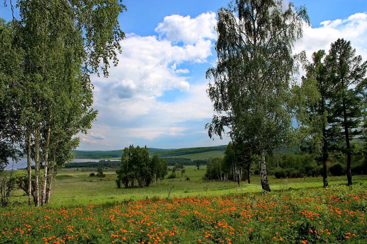 Пазл Собирать пазлы онлайн - Сибирское лето