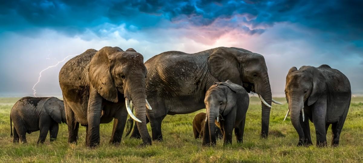 Пазл Собирать пазлы онлайн - Слоны и гроза