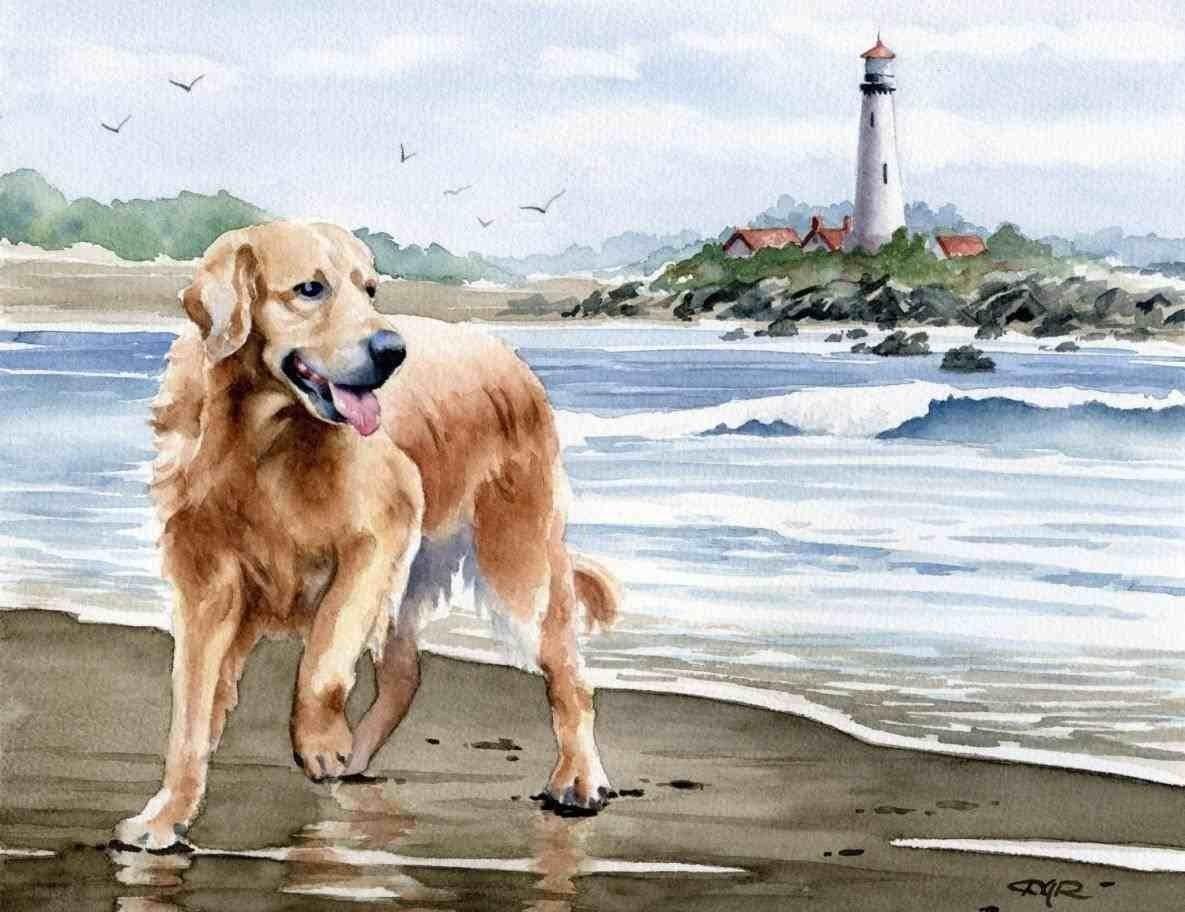 Пазл Собирать пазлы онлайн - Собака у моря