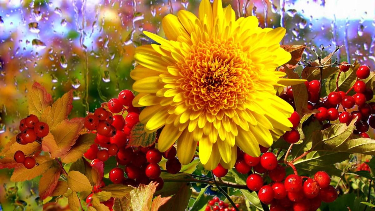 Пазл Собирать пазлы онлайн - Солнечный цветок