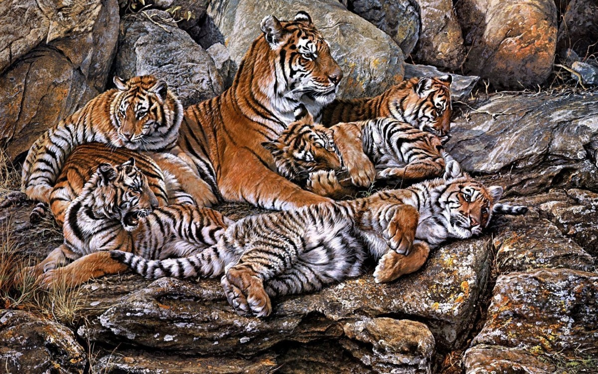 Пазл Собирать пазлы онлайн - Тигриная семья