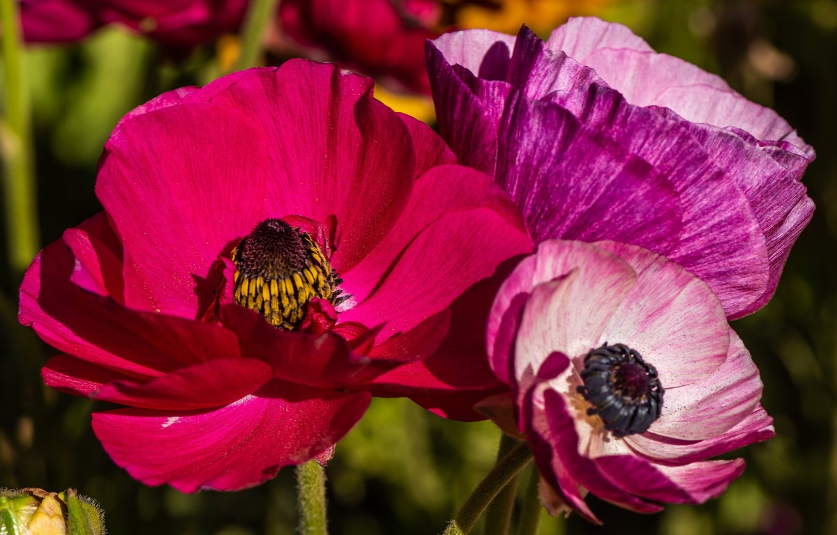 Пазл Собирать пазлы онлайн - Три цветка