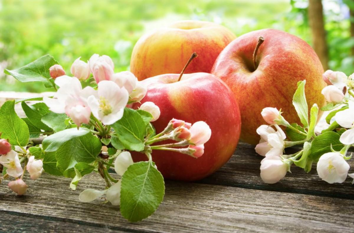 Пазл Собирать пазлы онлайн - Цветы и яблоки