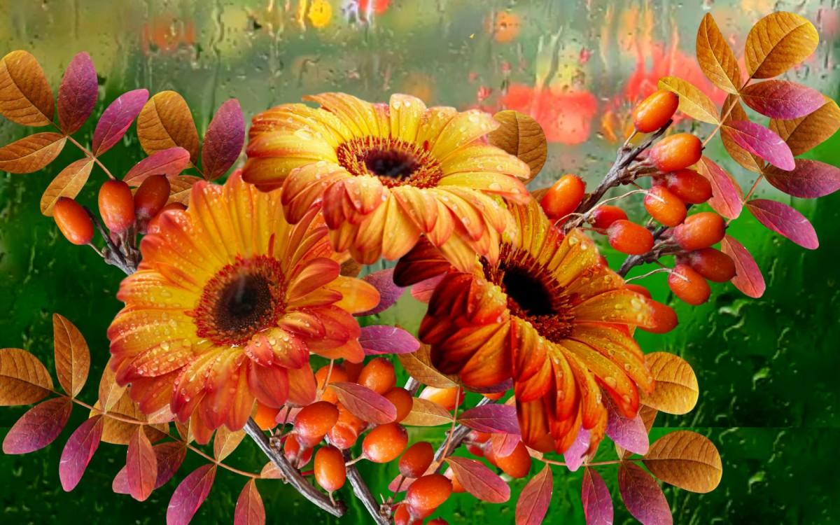 Пазл Собирать пазлы онлайн - Цветы и ягоды
