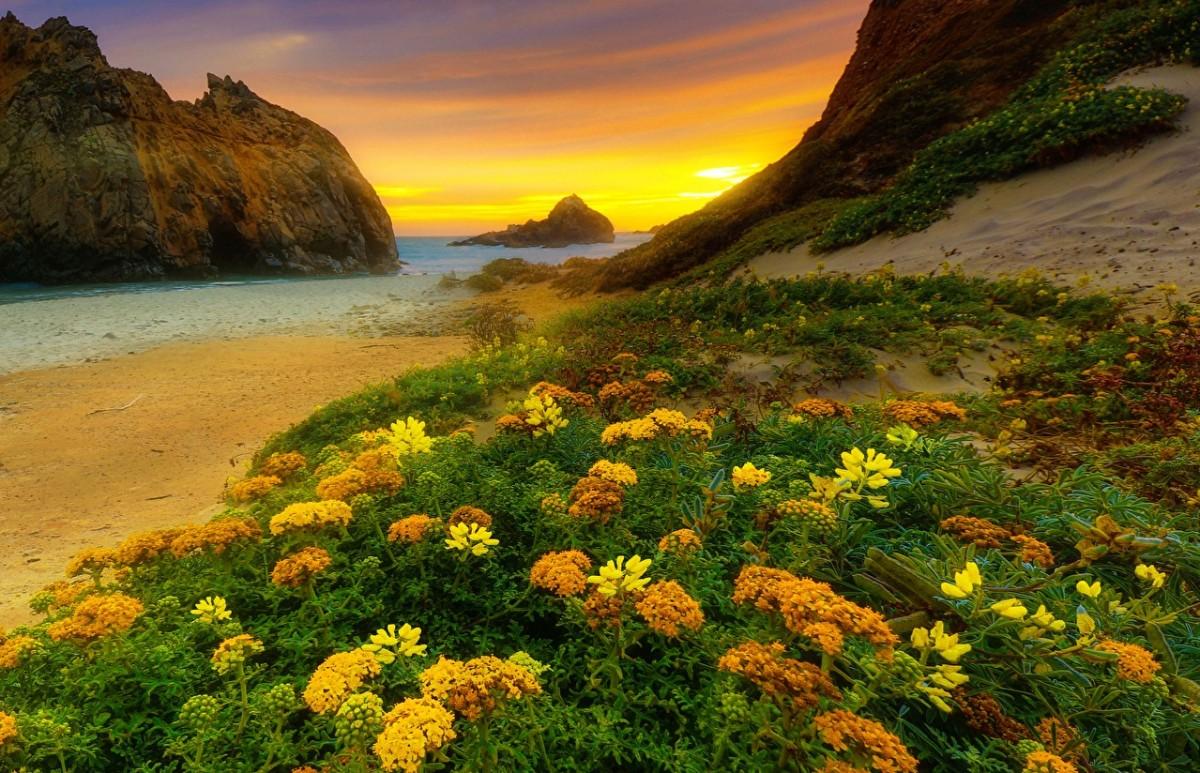 Пазл Собирать пазлы онлайн - Цветы на побережье