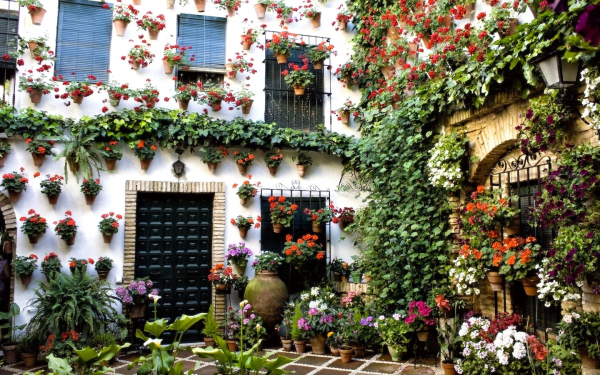 Пазл Собирать пазлы онлайн - Цветы на стене