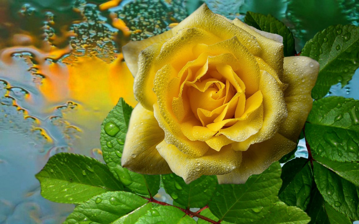 Пазл Собирать пазлы онлайн - Цветок
