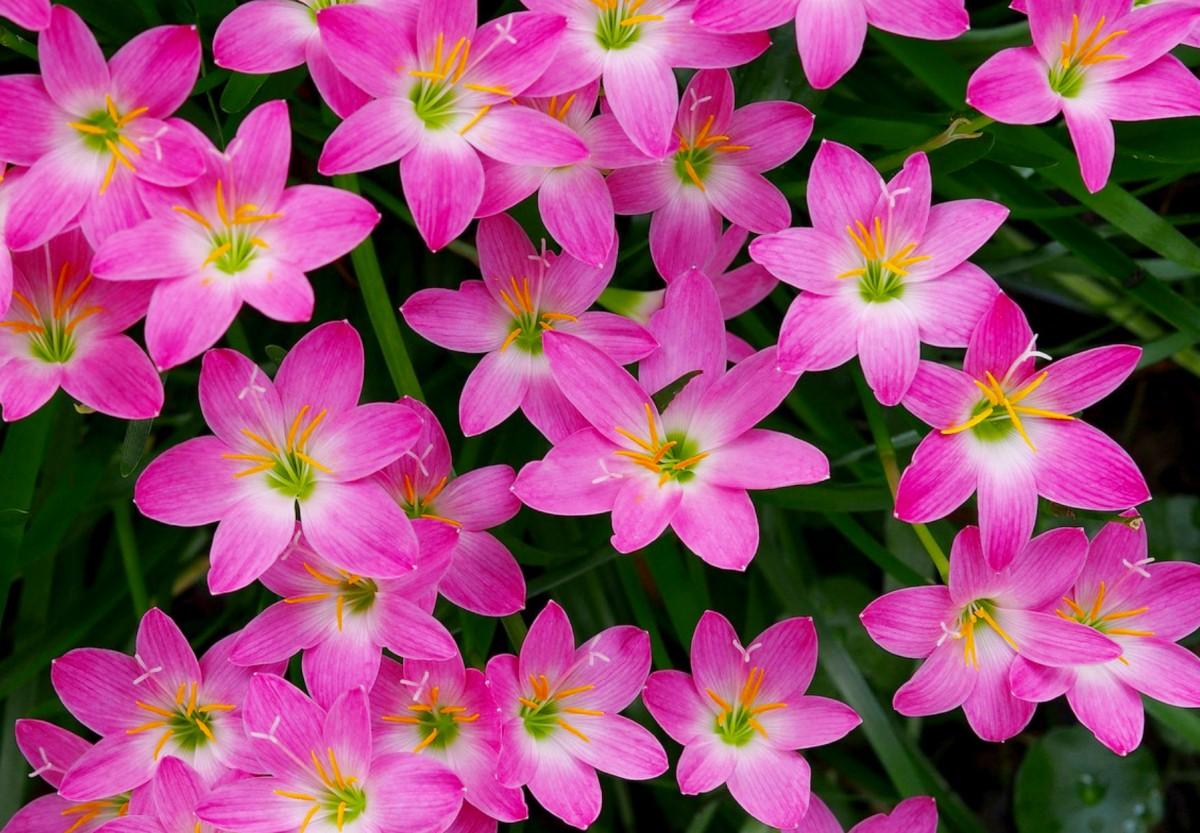Пазл Собирать пазлы онлайн - Цветок-выскочка