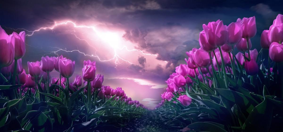 Пазл Собирать пазлы онлайн - Тюльпаны и гроза