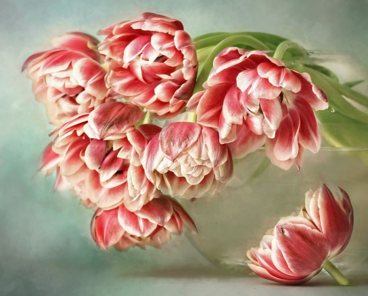 Пазл Собирать пазлы онлайн - Тюльпаны от Лиззи