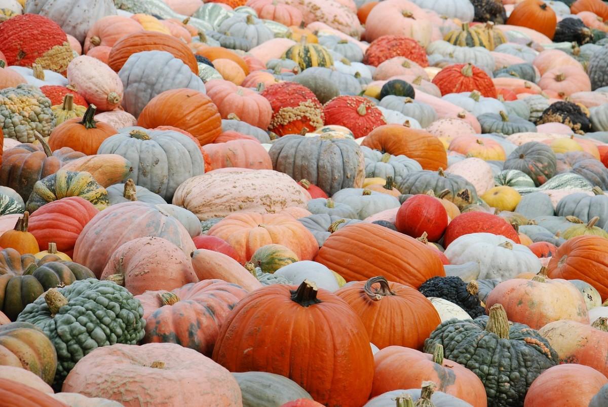 Пазл Собирать пазлы онлайн - Урожайный год