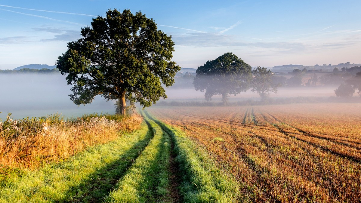 Пазл Собирать пазлы онлайн - Утренний туман