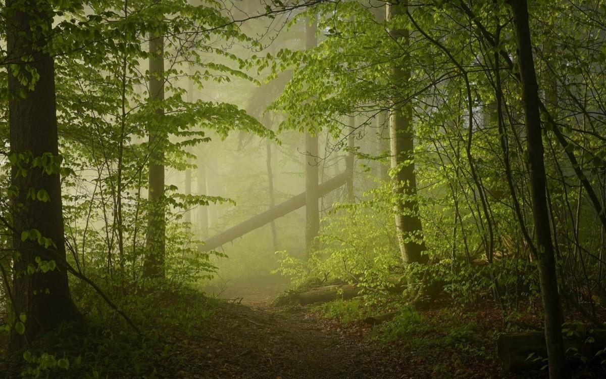 Пазл Собирать пазлы онлайн - Утро в лесу
