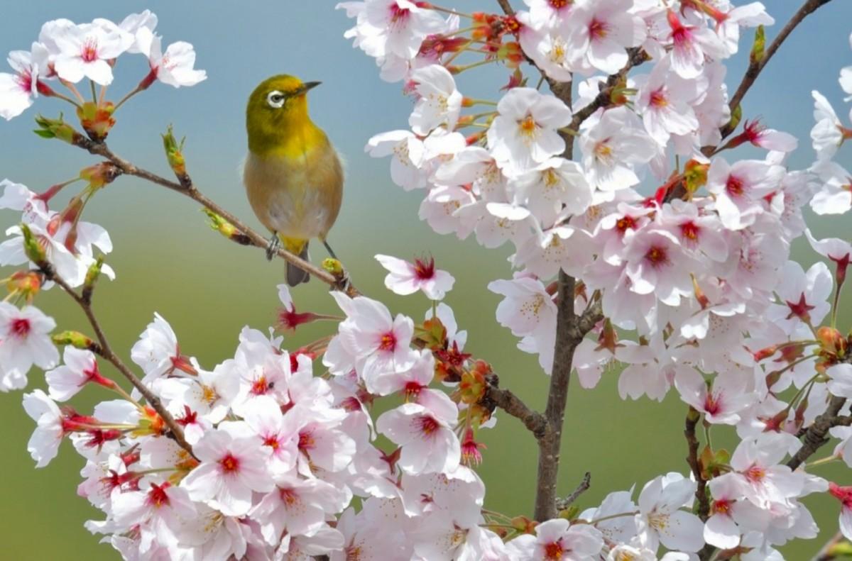 Пазл Собирать пазлы онлайн - Весна пришла