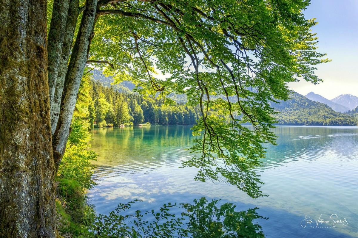 Пазл Собирать пазлы онлайн - Ветви над водой