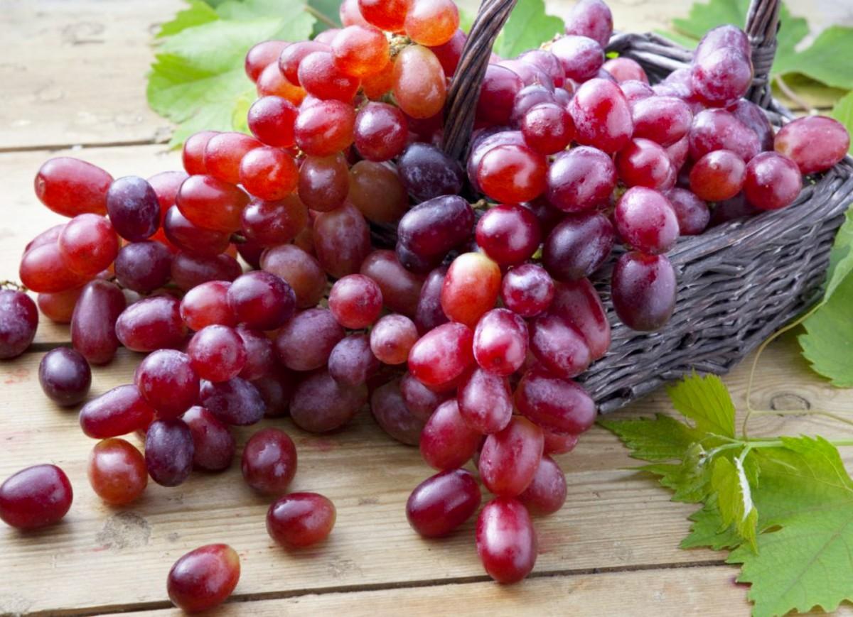 Пазл Собирать пазлы онлайн - Виноград в корзине