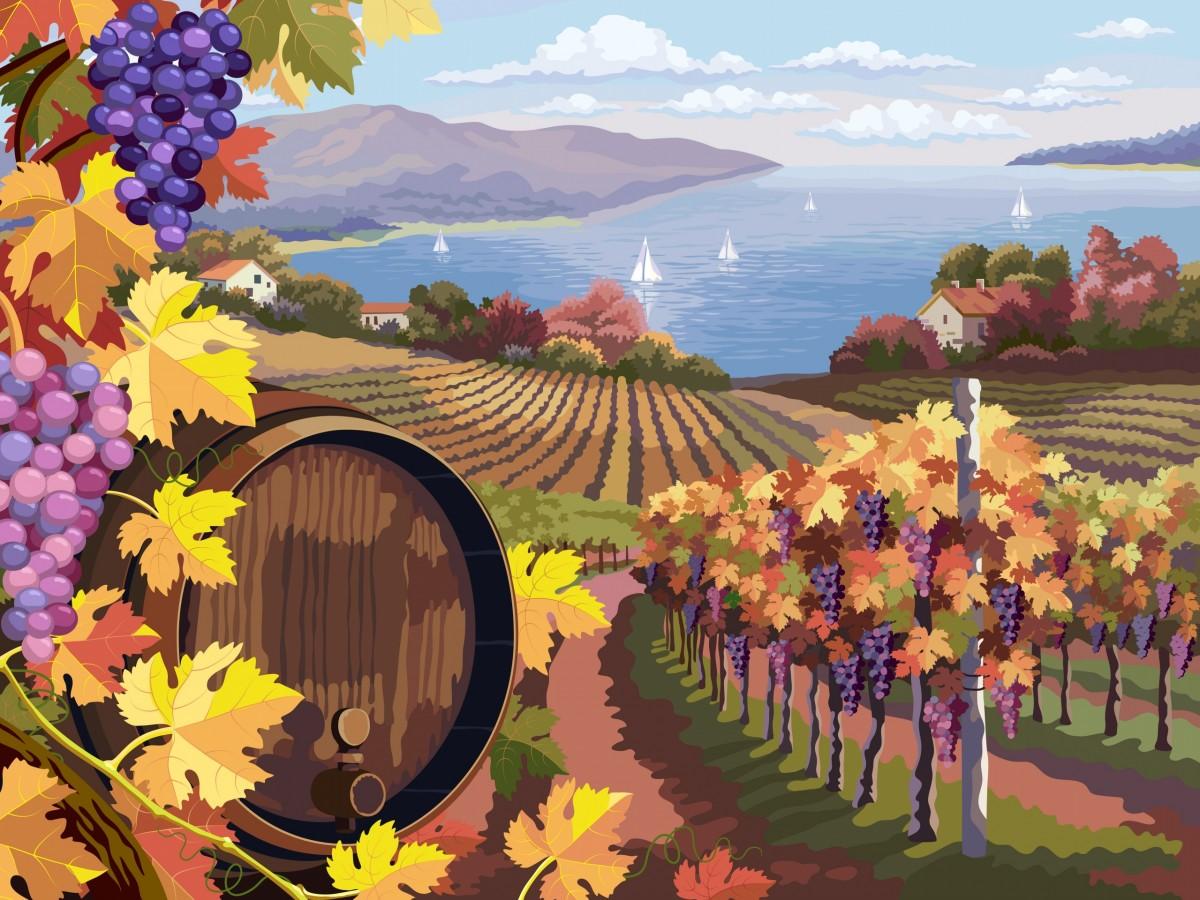 Пазл Собирать пазлы онлайн - Виноградник у моря