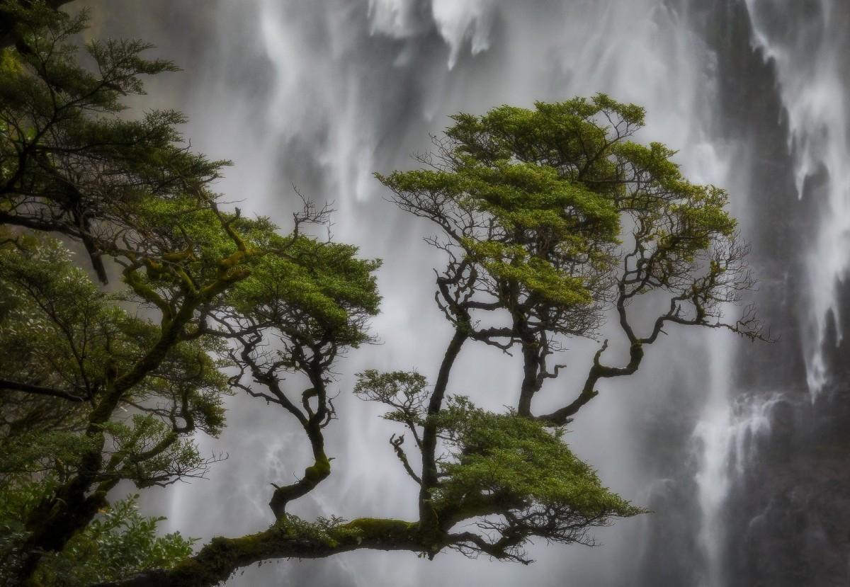 Пазл Собирать пазлы онлайн - Водопад и сосна