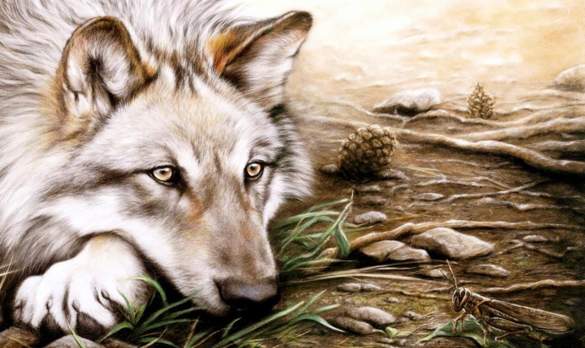 Пазл Собирать пазлы онлайн - Волк и кузнечик