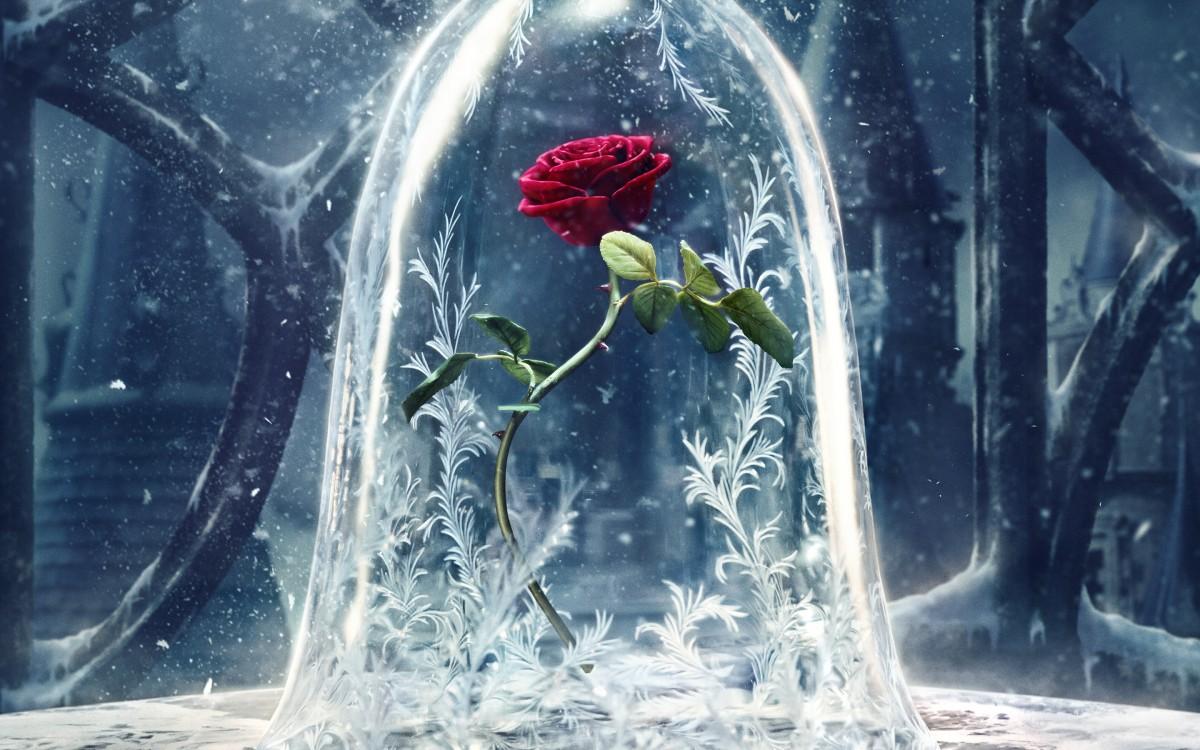 Пазл Собирать пазлы онлайн - Волшебная роза
