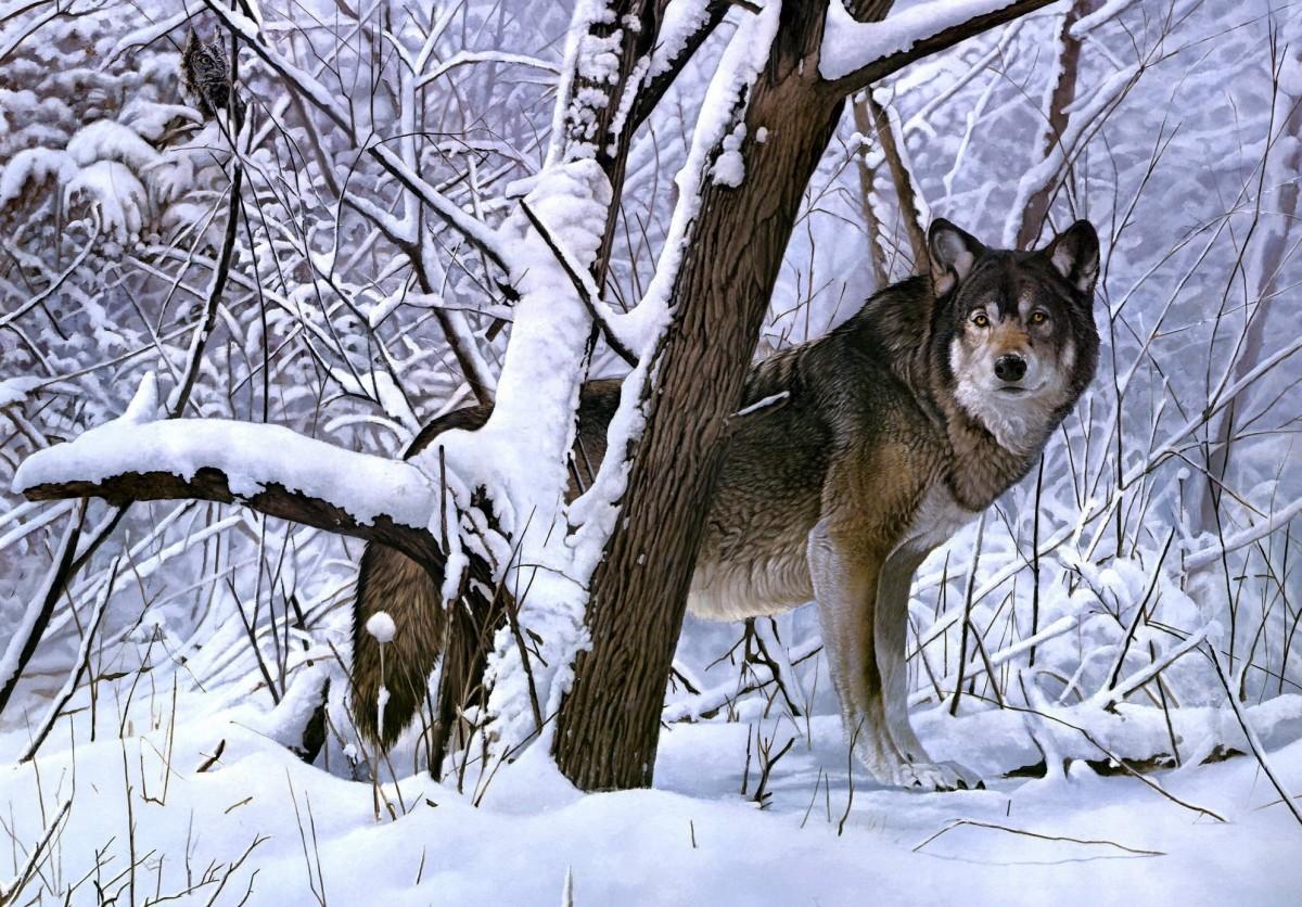 Пазл Собирать пазлы онлайн - Возвращение охотника