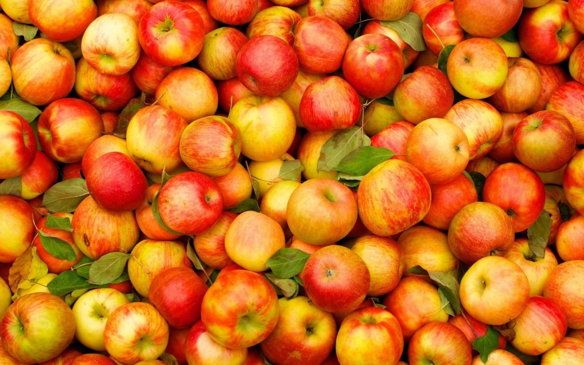 Пазл Собирать пазлы онлайн - Яблочное изобилие