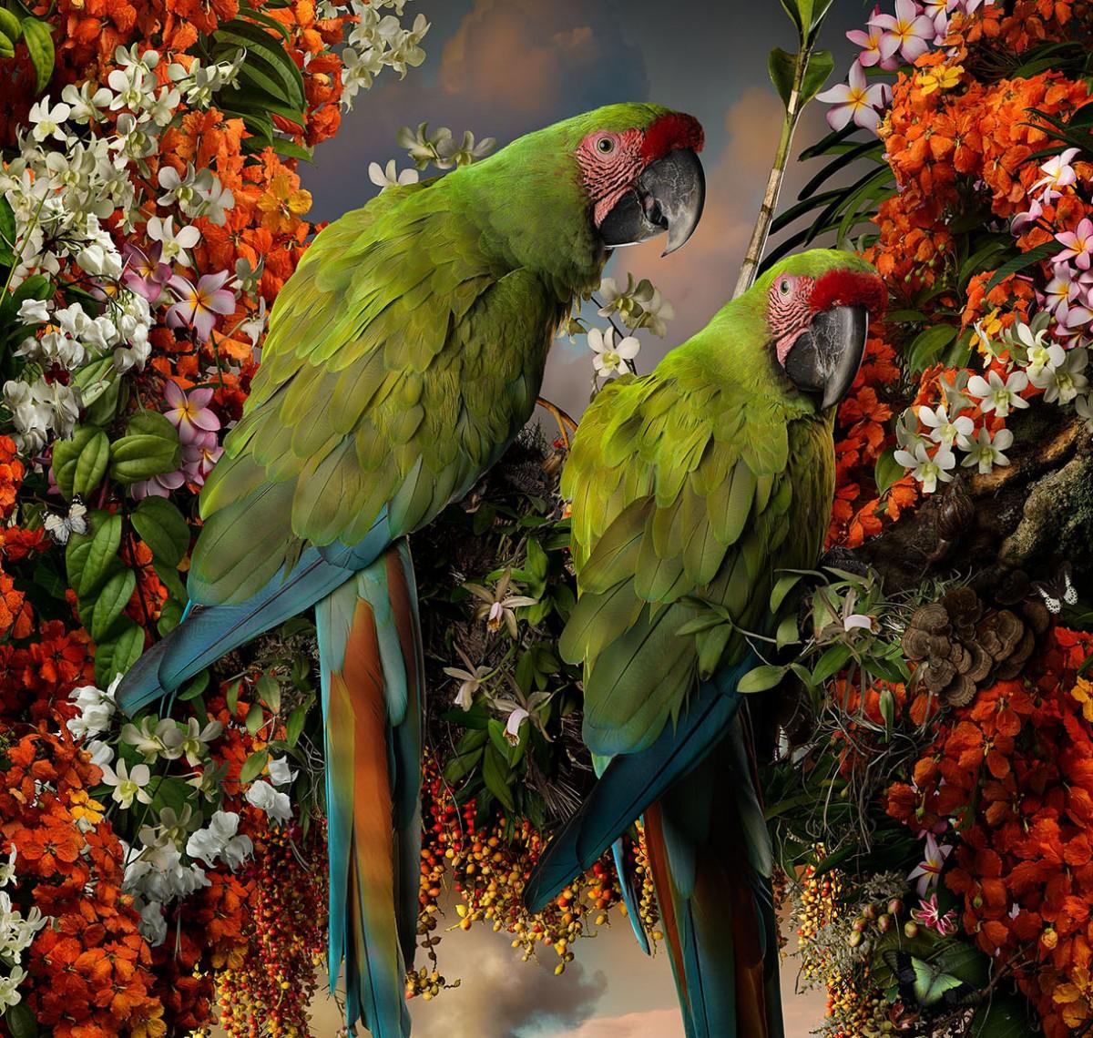 Пазл Собирать пазлы онлайн - Зелёные ара