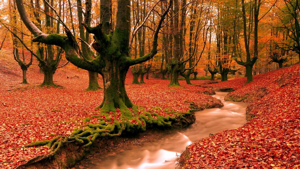 Пазл Собирать пазлы онлайн - Зелёные деревья