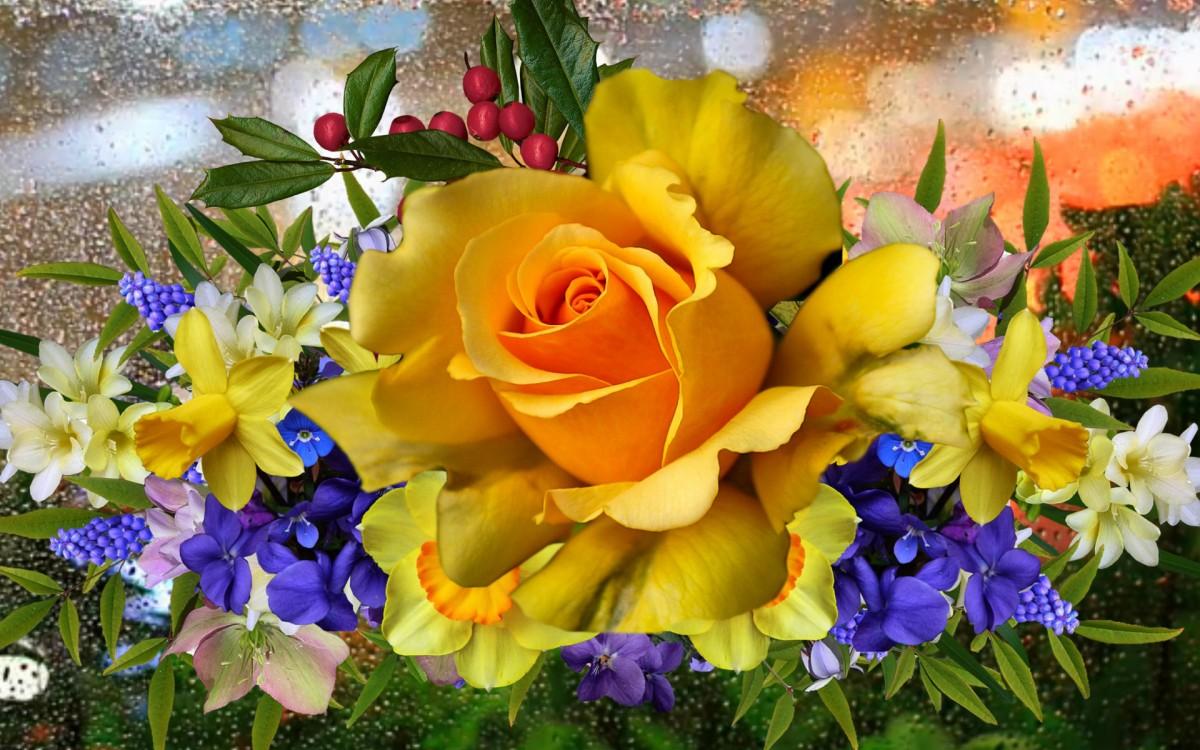 Пазл Собирать пазлы онлайн - Желтая роза
