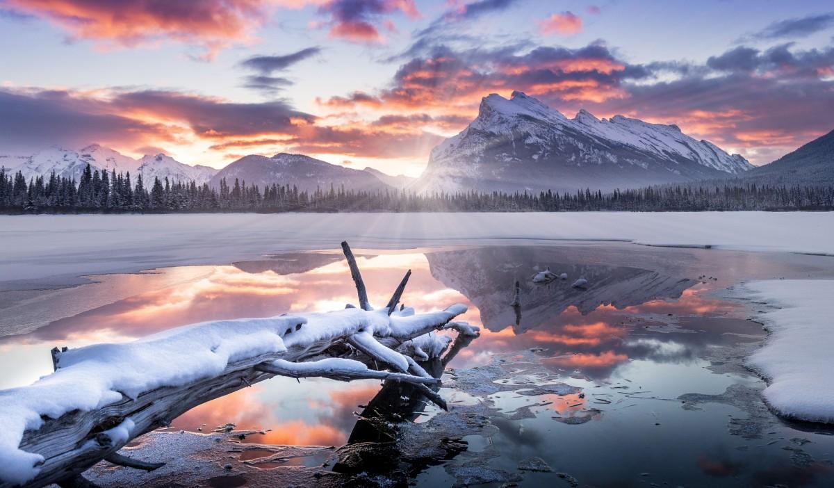 Пазл Собирать пазлы онлайн - Зима в заповеднике
