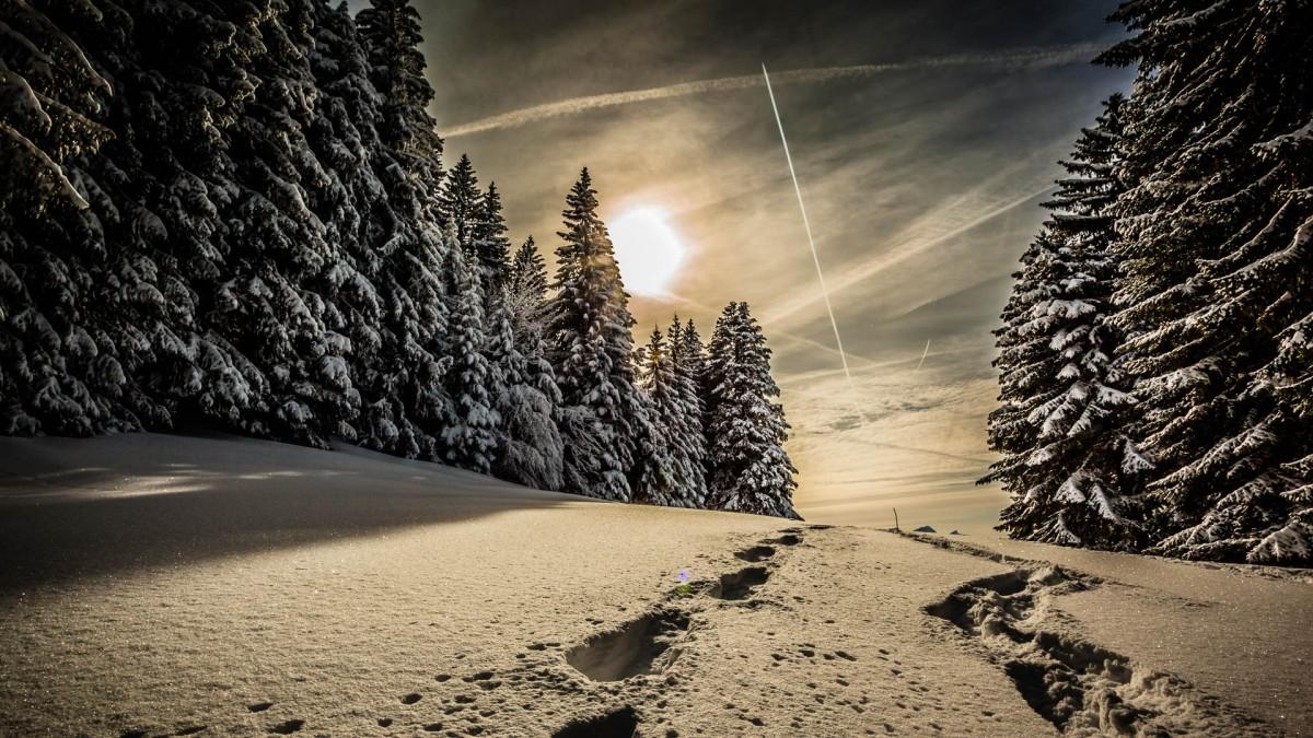 Пазл Собирать пазлы онлайн - Зимний бал