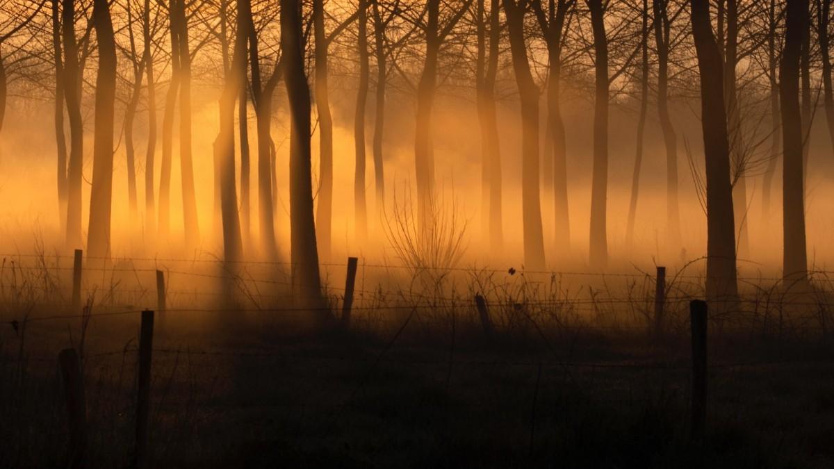 Пазл Собирать пазлы онлайн - Золотой туман
