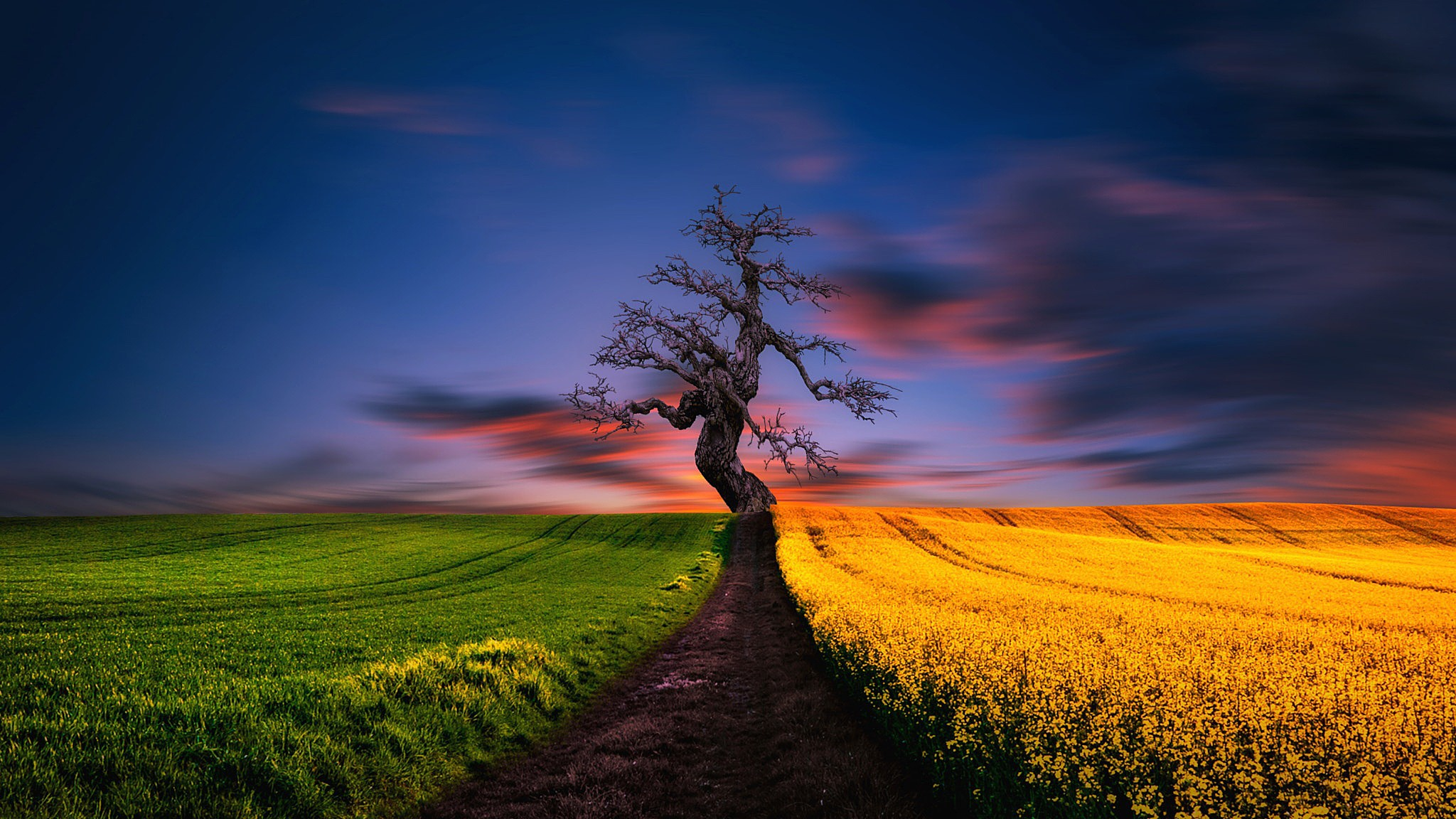 природа деревья поле загрузить