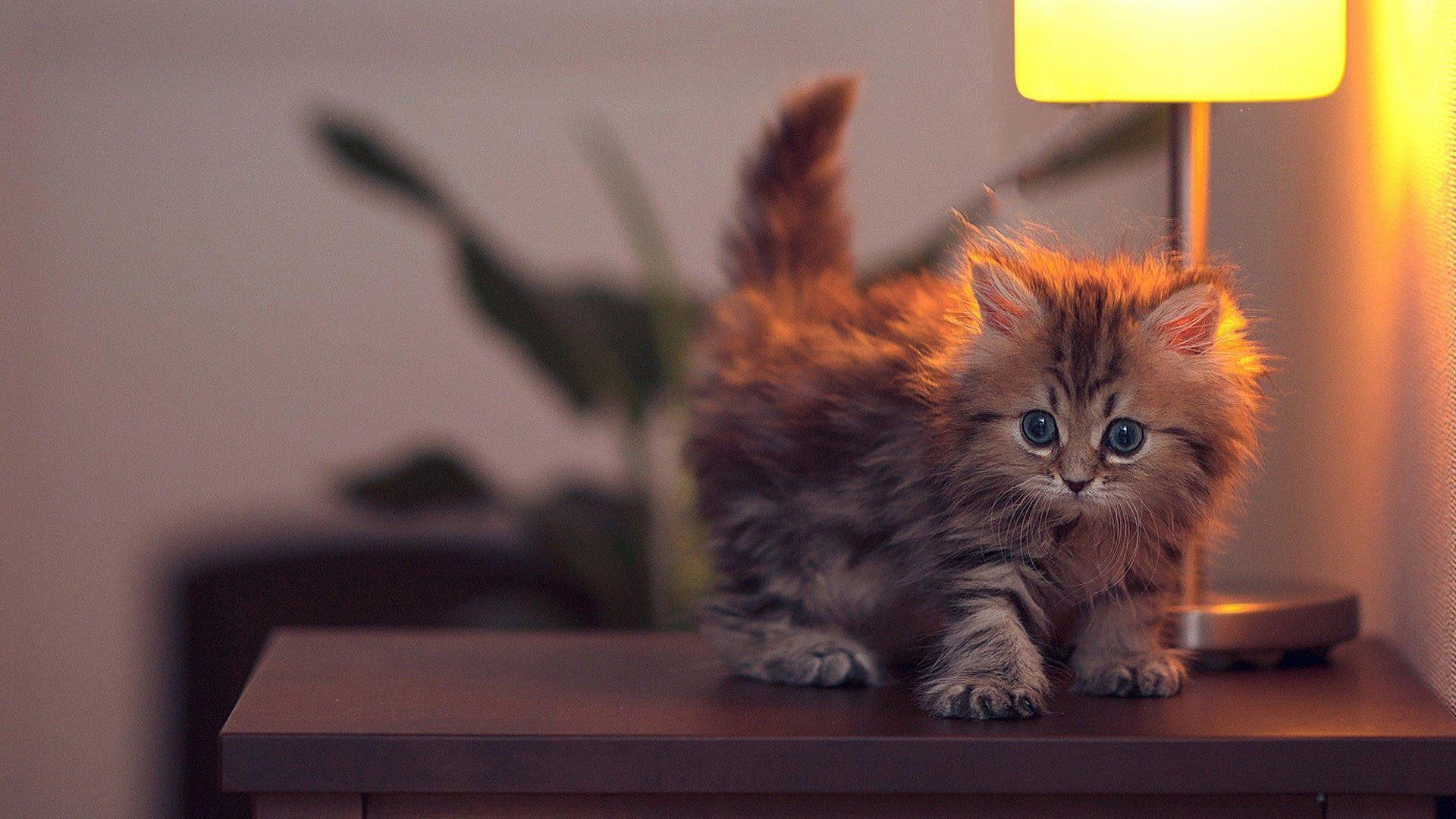 миленький котенок загрузить