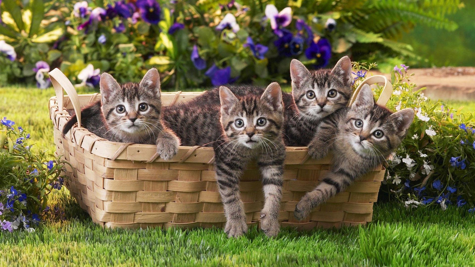 миленький котенок в корзине без регистрации