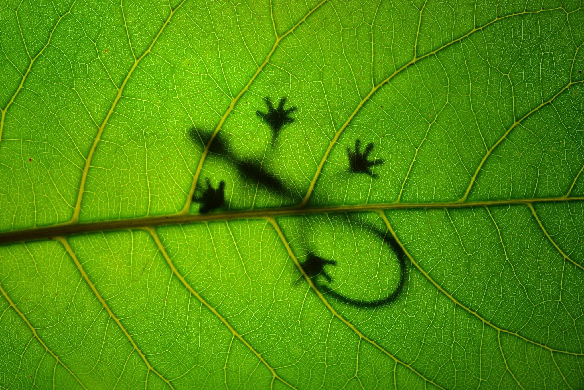Зеленая ящерица в листьях скачать