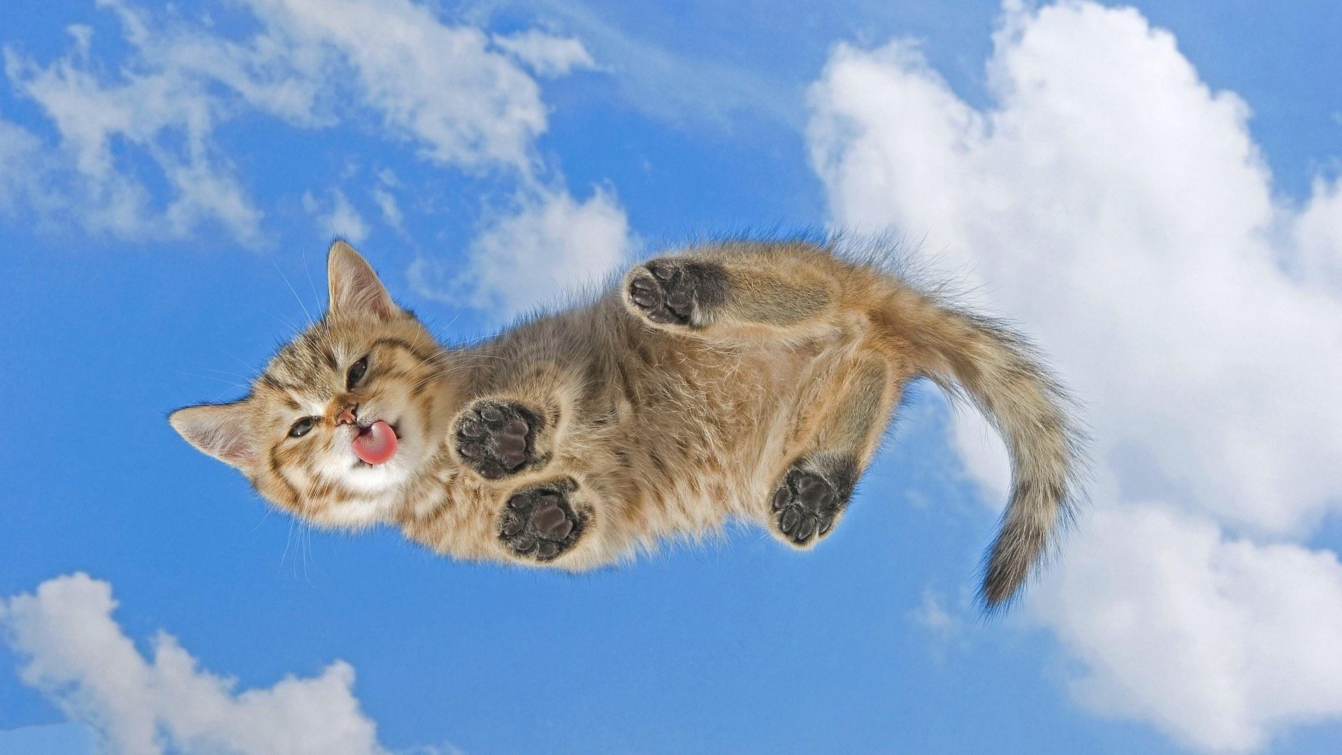 заставки на мобильник котёнок лижет-ви2